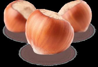 Hazelnuts calibration process