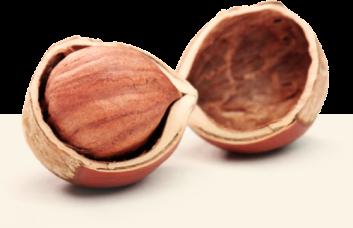 Hazelnuts cracking process