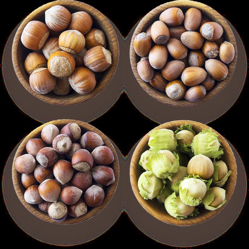 Different hazelnuts varieties