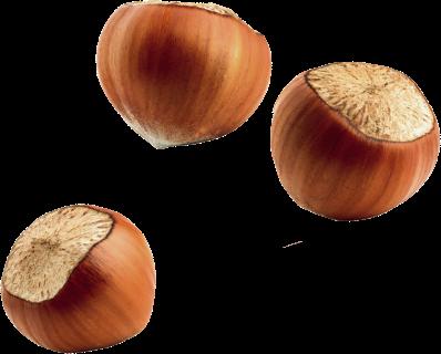 Ferrero Hazelnut Company (HCo)
