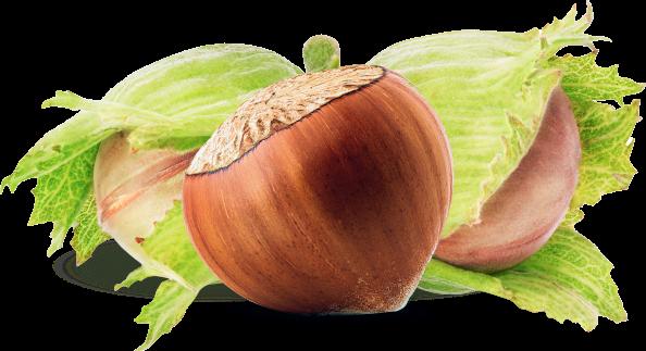 Hazelnuts image hero